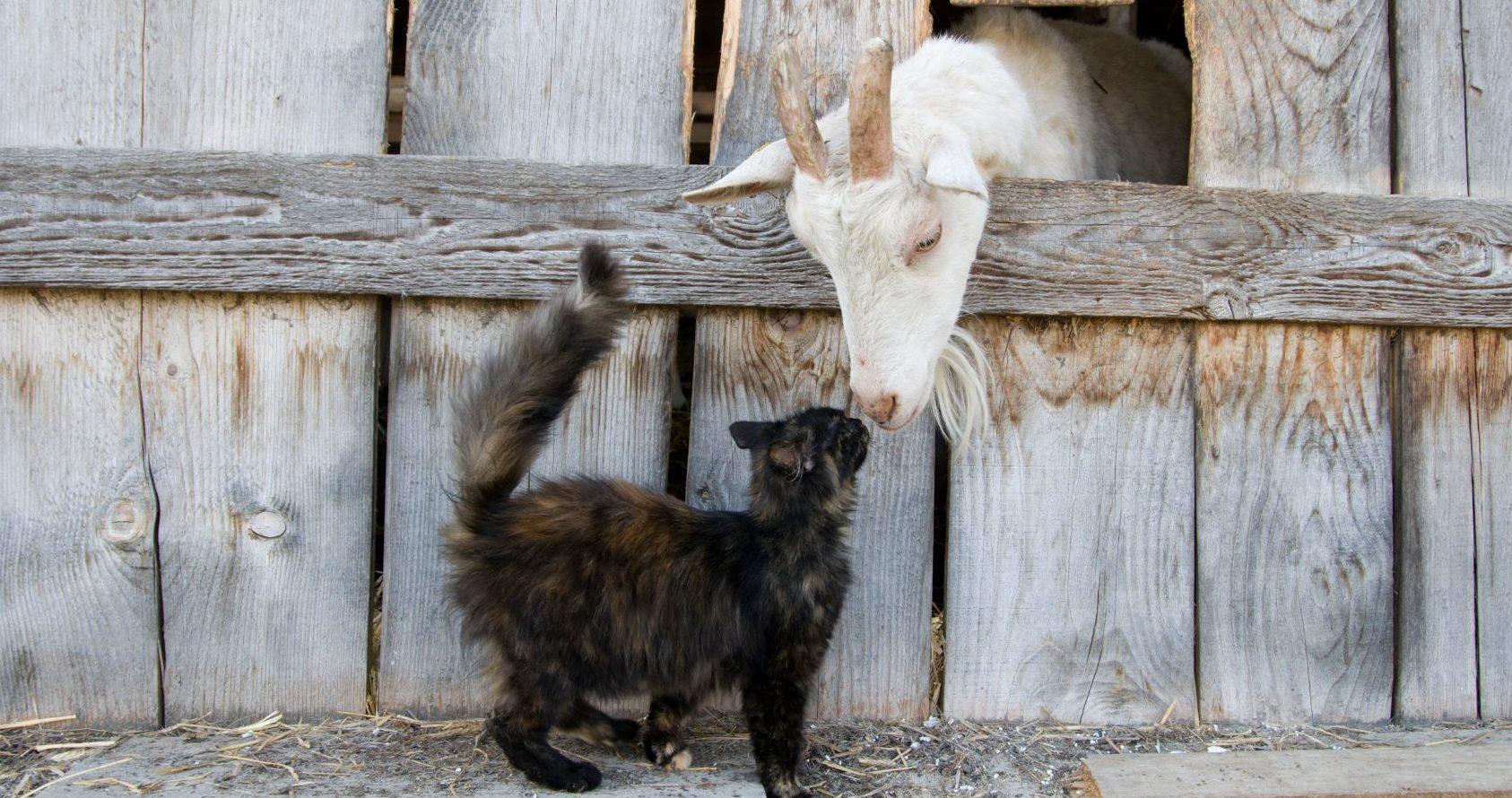 Maison de campagne recherch e services animaliers de la for Adaptation chat nouvelle maison